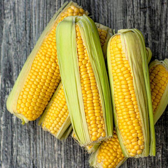 Maïs doux à cuire Bio