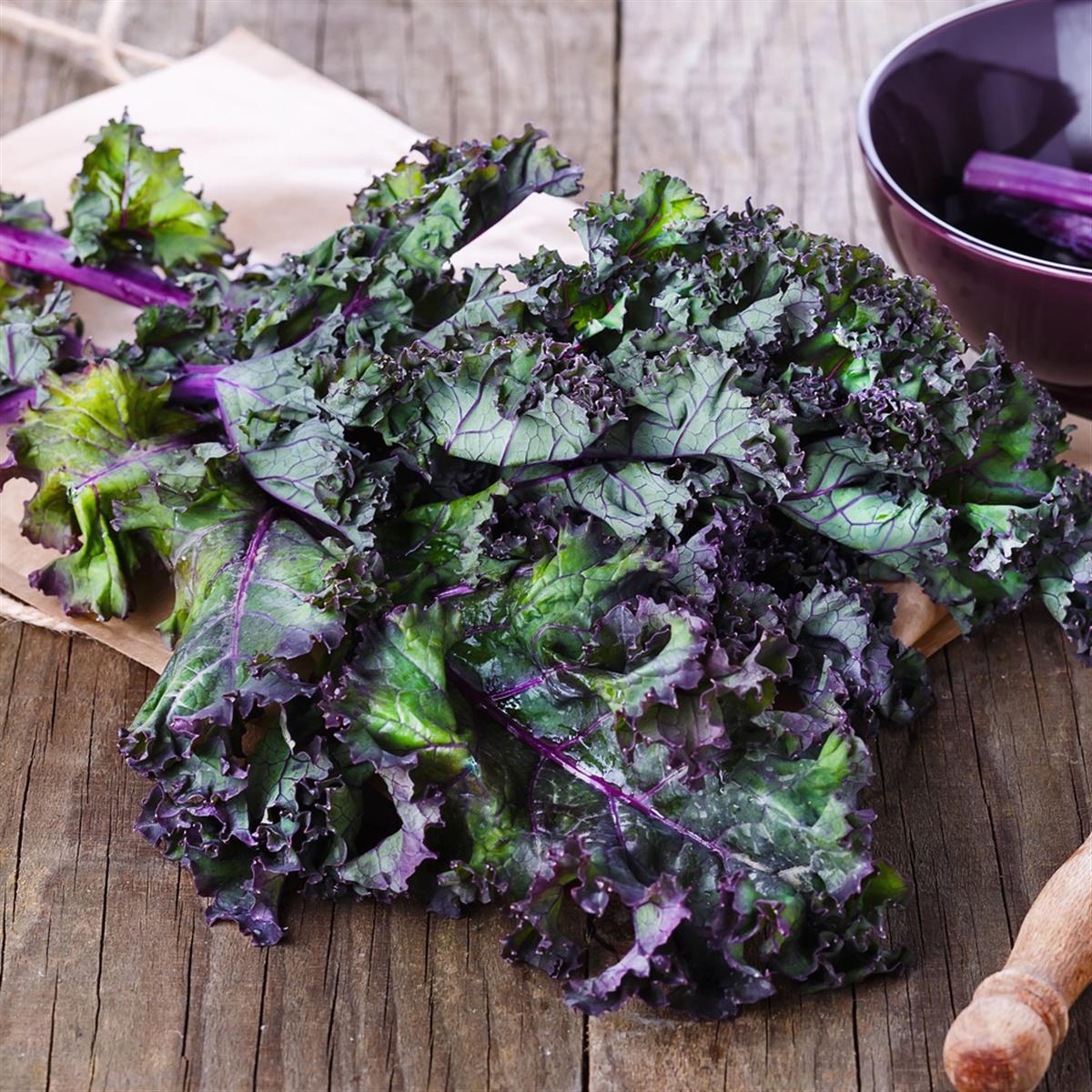 Chou Kale rouge, vert et noir Bio