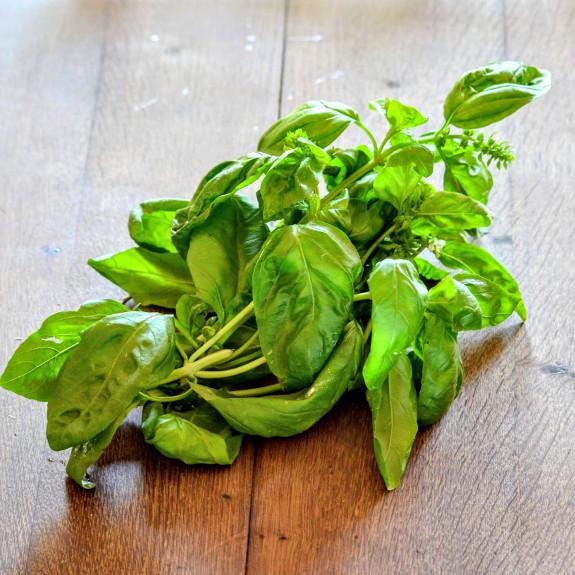 Basilic frais Bio