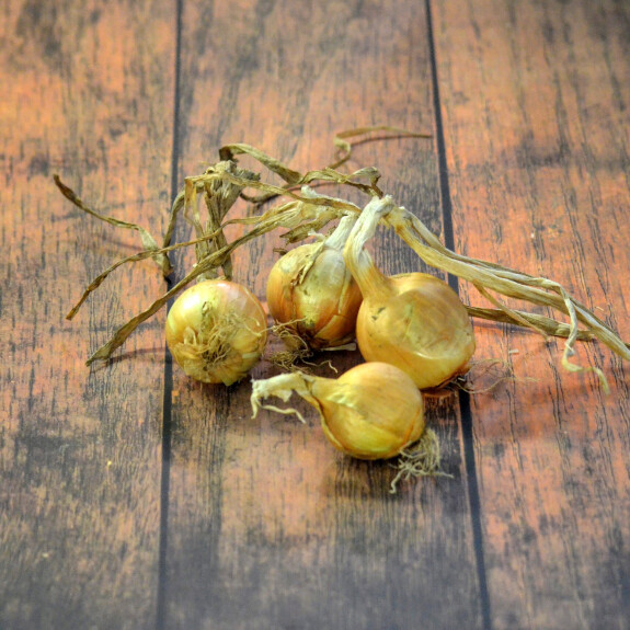 Oignon jaune Bio