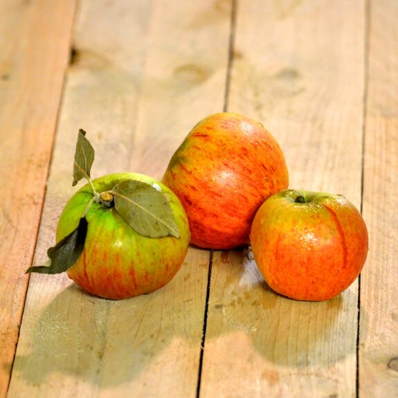 Pomme de Reinette Bio