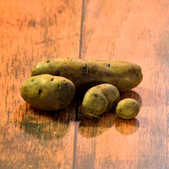 Pomme de terre violette du Cotentin